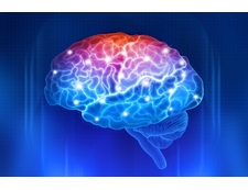 Влияние воды на работу мозга